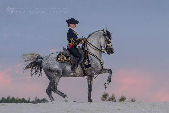 Pferd Barock