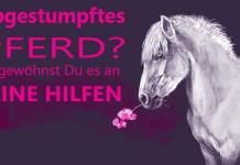 Abgestumpftes Pferd