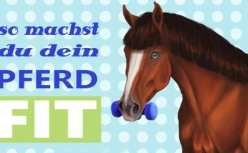 Muskelaufbau Pferd