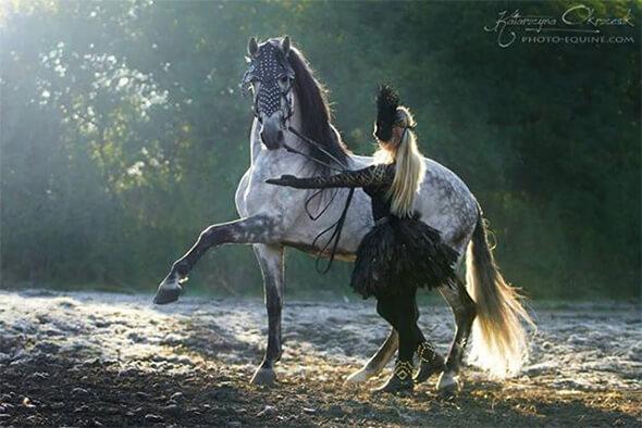 Pferd Barock Kostüm