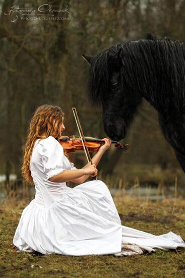 Pferd Geige 2