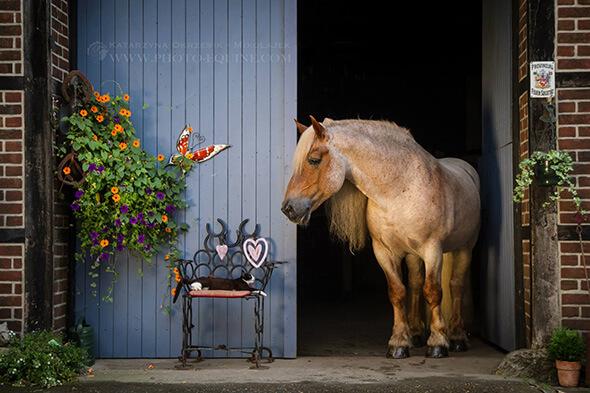 Pferd Hof