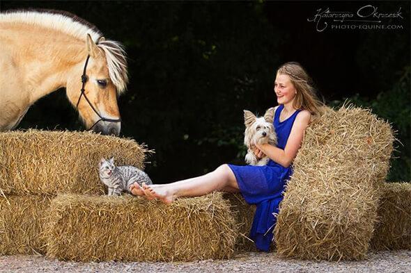 Pferd Katze