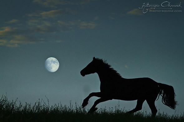 Pferd Mond