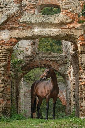 Pferd Ruine