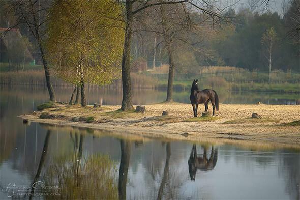 Pferd See