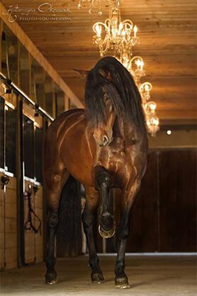 Pferd Stall
