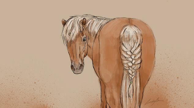 7 Arten Die Mähne Deines Pferdes Einzuflechten Herzenspferd