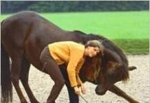 Meine Pferdeschule Nathalie Penquitt