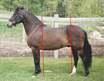 Wie du am aussehen deines pferdes seine baustellen for Exterieur beurteilung pferd