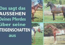 Exterieur Pferd
