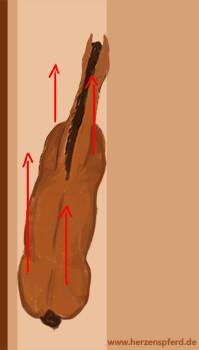 Natürliche Schiefe Pferd