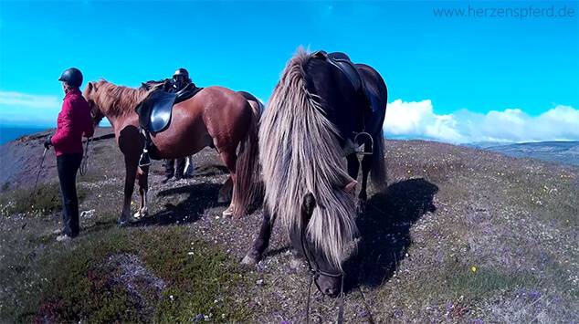 Reiturlaub Island Ponys
