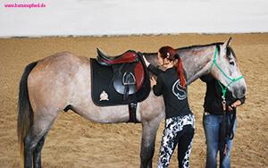 Sandra steht neben dem Pferd und hat ihre Hand in der Kammer des Sattels - sie prüft, ob er auf eine alte Wunde drückt.