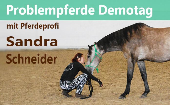 Pferdeprofi Sandra Schneider sitzt in der Hocke in der Halle. Ein Apfelschimmel streckt ihr neugierig und vertrauensvoll den Kopf entgegen.