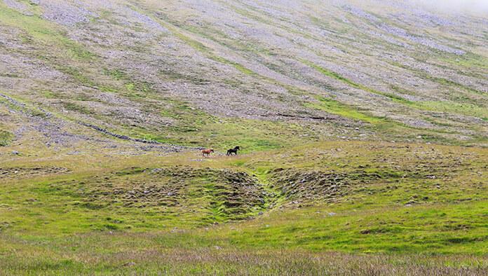 Man sieht die zwei Jährlinge aus weiter Entfernung am grünen Berghang.