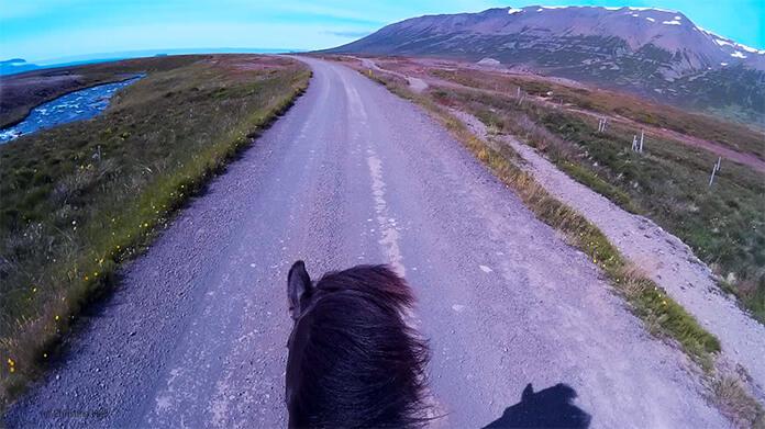 Ein Bild von Christinas Helmkamera: man sieht die Ohren und den Hals von Nói. Vor ihm breitet sich ein breiter Weg und die weite Ebene aus. Rechts sind die hohen Berge, links ist der Gletscherfluss.