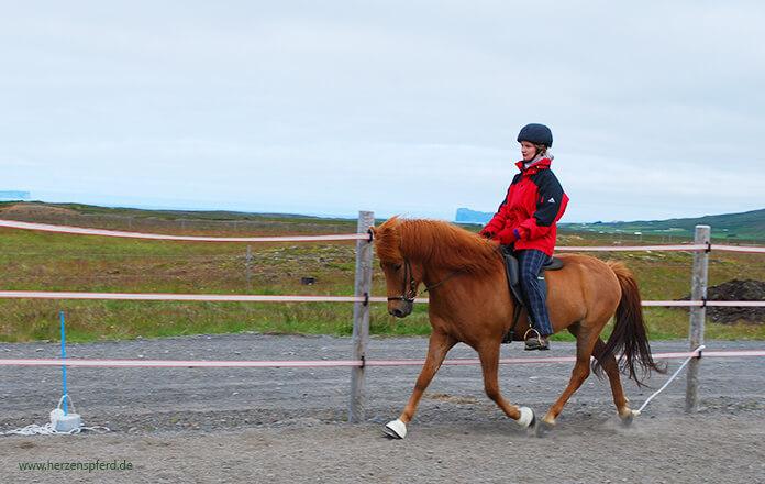 Reitunterricht in Island: Christina auf einem großen, schmalen Fuchs im Trab. Er trabt in guter Haltung und feiner Anlehnung. Im Hintergrund sieht man die Koppeln von Lynghorse und kann das Meer erahnen.