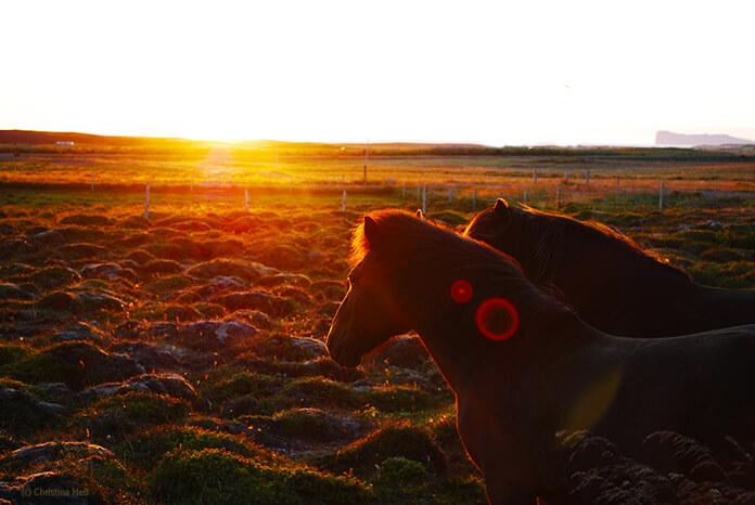 Die rote Sonne geht am Horizont unter. Im Vordergrund stehen zwei Ponys deren Umrisse vom roten Licht beleuchtet werden.