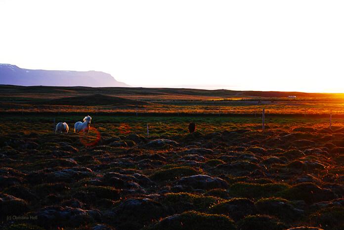 Die rote Sonne geht am Horizont unter. Man sieht eine weite Koppel mit mehreren Ponys deren Umrisse vom roten Licht beleuchtet werden.