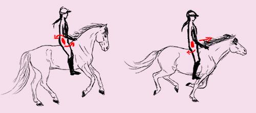 Eine Zeichnung von zwei galoppierenden Pferden mit Reiter. Die Beckenbewegung des Reiters ist mit eingezeichneten Pfeilen verdeutlicht.