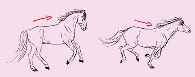 Eine Zeichnung von zwei galoppierenden Pferden. Die Bewegung des Rückens ist mit eingezeichneten Pfeilen verdeutlicht.