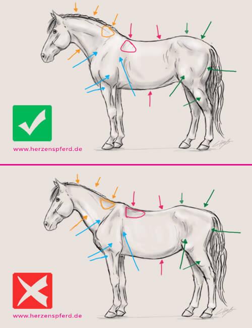 Trainierst Du Dein Pferd richtig? Was die Bemuskelung Deines Pferdes ...