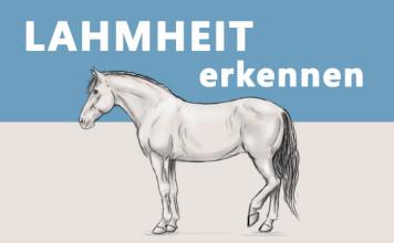 Zeichnung eines Pferdes, das eines seiner Hinterbeine entlastet