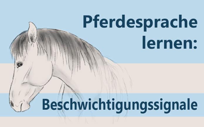 Pferdesprache lernen: Beschwichtigungssignale
