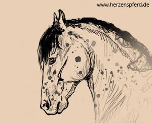 Pferd mit konzentriert nach hinten genommenen Ohren