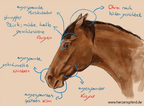 Schmerzgesicht Pferd
