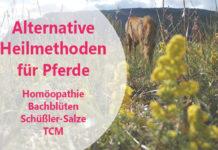 Pferd auf Wiese mit Text: Alternative Heilmethoden für Pferde