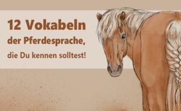 12 Vokabeln der Pferdesprache