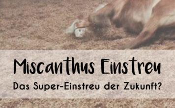 """Bild von wälzendem Pferd mit Text """"Miscanthus Einstreu - Das Super-Einstreu der Zukunft?"""""""