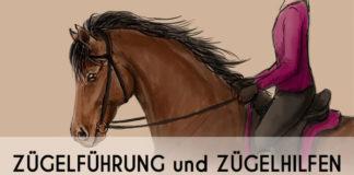 """Bild eines gezeichneten Pferdes mit Reiter mit Überschrift: """"Zügelführung und Zügelhilfen - Grundlagen, Tipps und Übungen"""""""