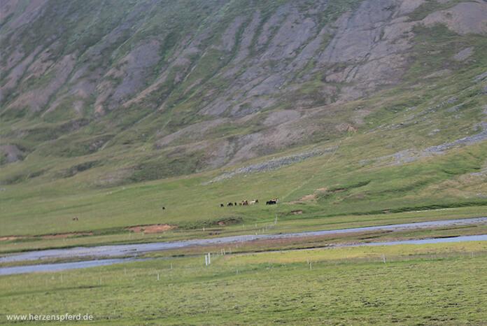 Eine Herde Islandpferde im grünen Tal, im Hintergrund die hohen Berge des Hochlands
