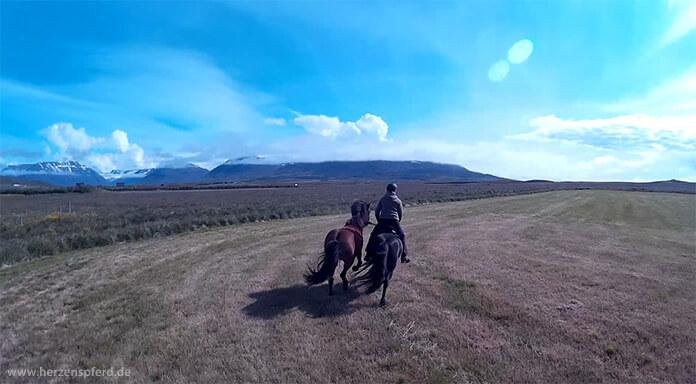 Reiterin mit Handpferd galoppiert über eine Wiese im Skagafjord