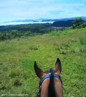 Aussicht auf das Meer und die Buchten der Bay of Islands zwischen den Ohren eines Pferdes hindurch