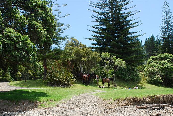 Pferde und Reiter machen Pause im Schatten eines Baumes am Meer in Neuseeland