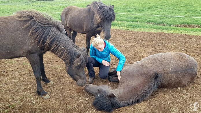 Hlín kniet neben einem liegenden Pferd und streichelt seine Brust. Ein weiteres Pferd beschnüffelt ihre Schulter, ein Zweites berührt die Nase des liegenden Pferdes mit seiner eigenen.