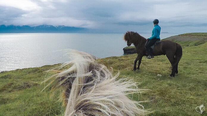 Blick durch die Ohren eines Islandpferdes auf eine Reiterin, die mit ihrem Pferd dicht an den Klippen entlangreitet.