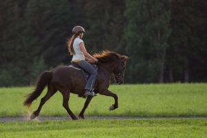 Eine Reiterin sitzt auf einem in guter Haltung töltenden Islandpferd.