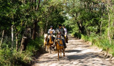 Eine Gruppe Reiter im Paso Llano auf einem breiten Sandweg zwischen Bäumen.