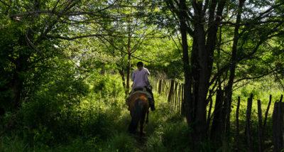 Eine Reiterin auf einem schmalen Pfad zwischen hohen, dicht bewachsenen Bäumen.