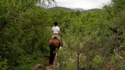 Eine Reiterin auf einem schmalen Pfad zwischen dichten Büschen.