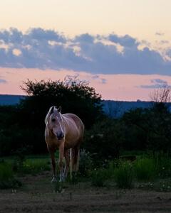 Eine Stute steht vor einem rosa-blauen Himmel kurz nach Sonnenuntergang.